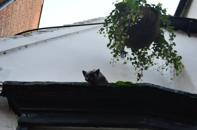 One of the twenty or so cat statues that adorn buildings in the historic city of York. (Picture: Jackie Buckle)