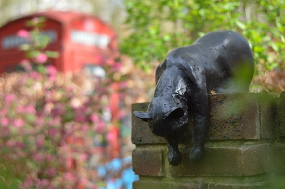Sam the cat, Queen Square Gardens, Holborn, London WC1N 3AU. (Picture: Jackie Buckle)