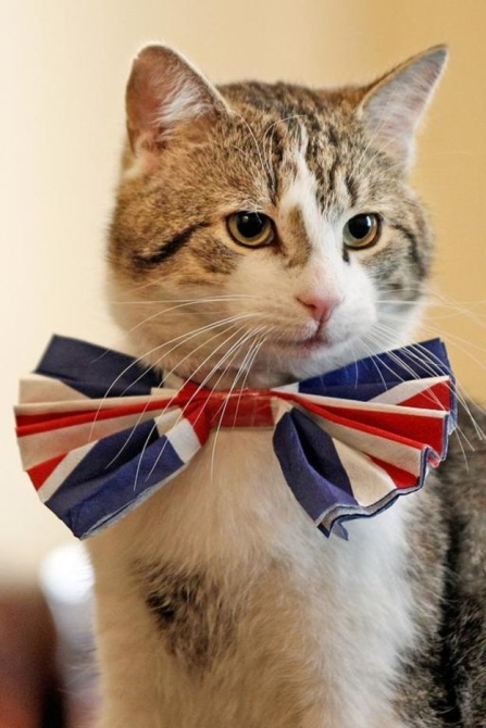Patriotic Larry survives latest cabinet reshuffle (Picture Getty Images)