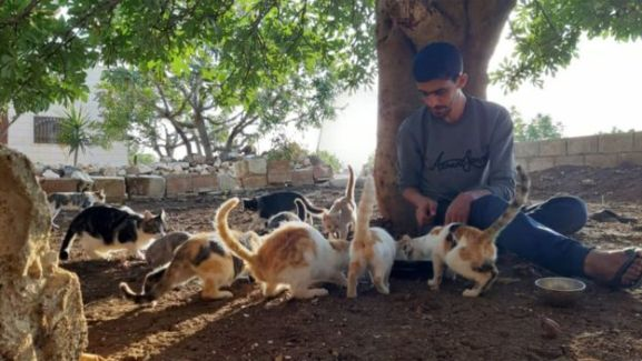 32-year-old Salah Jaar feeding the many cats made homeless by the bombing. (Photo: BBC)