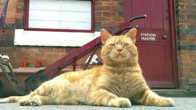 Alfie the Rushden Station cat (photo credit: Rushden Station)