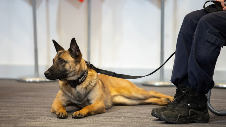 A service dog attends a press conference held by Poland's interior ministry on February 18, 2021. ©  gov.pl